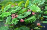 朝鲜油画 崔成哲(1级画家)111*165cm 布面油画 荷花8